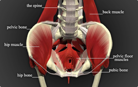 image Kegel vagina exercises to build up arousal