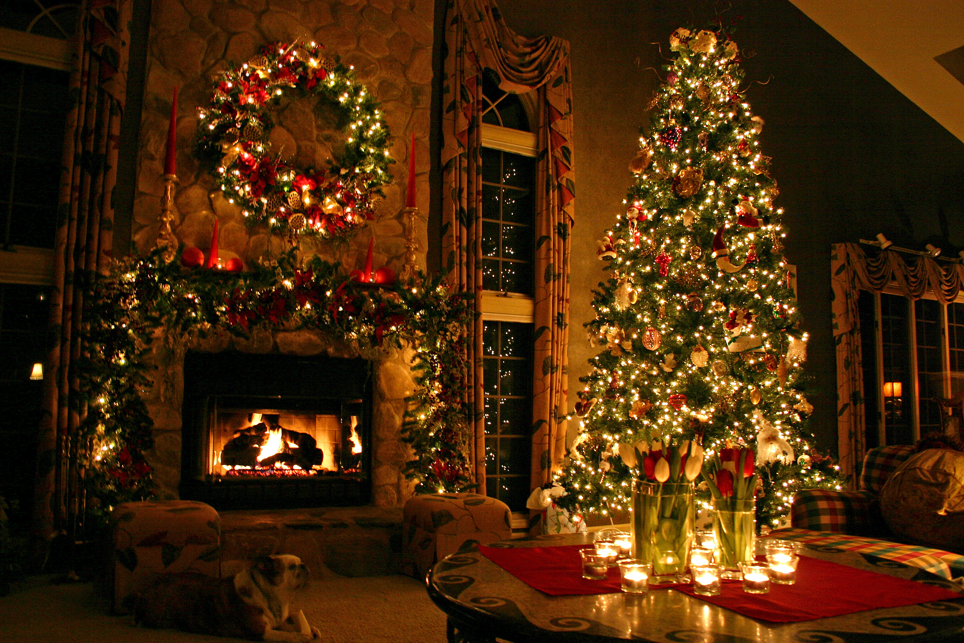 Best Christmas Trees.How To Find The Best Christmas Tree For Your Home Clickhowto