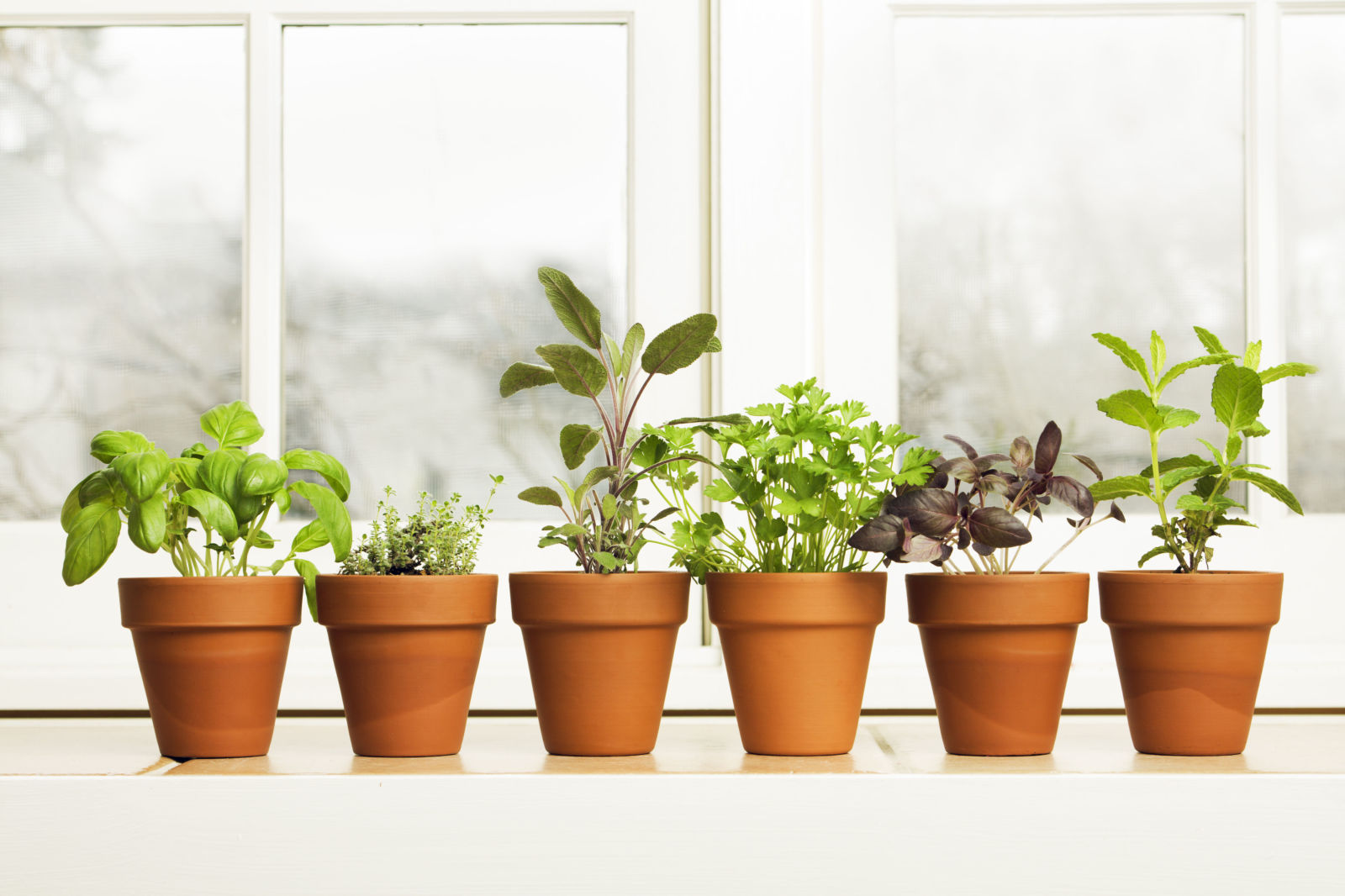 How to grow herbs and spices indoors clickhowto for What plants can i grow indoors