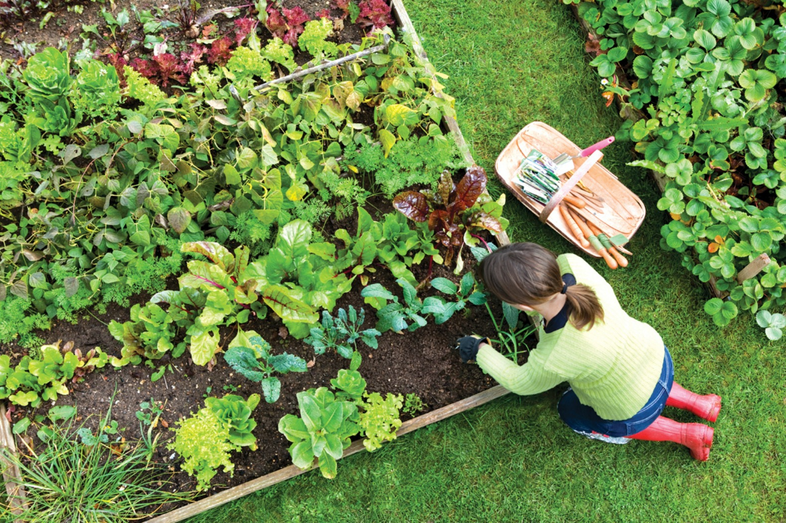 Attractive How To Plan An Edible Landscape