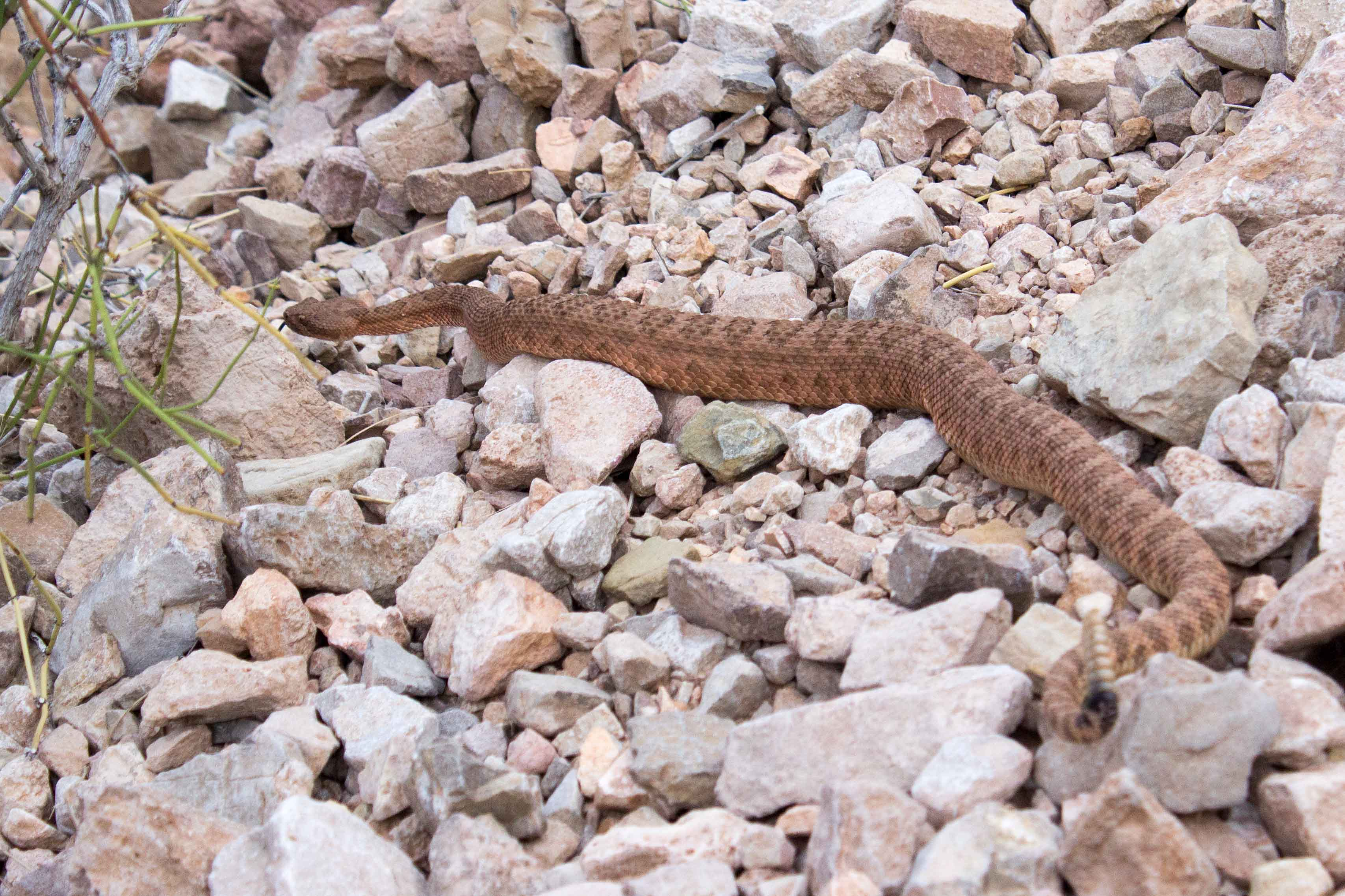 Hike the Grand Canyon snake